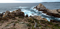 Point_Lobos_062.jpg