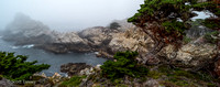 Point_Lobos_1105.jpg