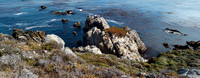 Point_Lobos_1344.jpg