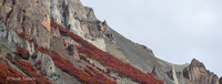 Lengas Fall Color on Mountain 03.jpg