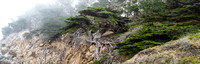 Point_Lobos_1076.jpg